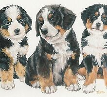 Bernese Mountain Dog Puppies by BarbBarcikKeith