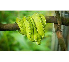 Green Snake Photographic Print