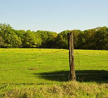 Fence Post by WildestArt