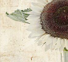 Sunny Albino Sunflower by Sandra Foster