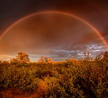 Rainbow Brush by Bob Larson