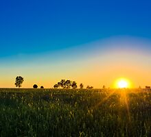 Green Field And Beautiful Sunset by GrishkaBruev