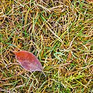 Frost Covered Leaf on a Grassy Background by GrishkaBruev