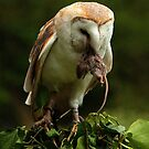 Barn Owl and Mouse by Norfolkimages