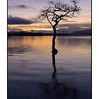 Loch Lomond by Maureen Anderson