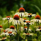 Vivid Cone Flowers by Renee Ellis
