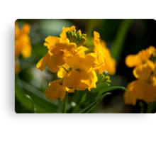 Antirrhinum (Snap Dragon) Flowers Canvas Print