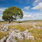 Lone Tree in Yorkshire by CJ B