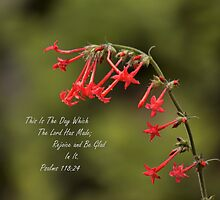 Psalms 118:24 by rjorg