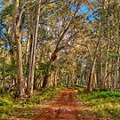 Gum Tree Magic - Coolah Tops National Park NSW - The HDR Experience by Philip Johnson