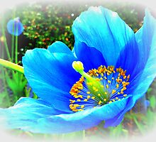 The Himalayan Blue Poppy by Fara