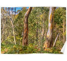 Survivors - Coolah Tops National Park - The HDR Experience Poster