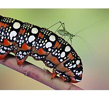 Backhopper Photographic Print