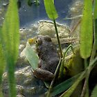 A Young Frog by angelandspot