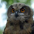 Young Eurasian Eagle Owl by JenniferLouise