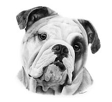 Dog in Pencil by Paul-M-W