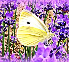 Large White on Lavender by ©The Creative  Minds
