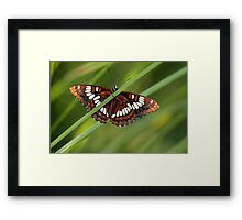 Just Hangin' Framed Print