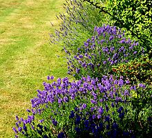 Lavender On Green by Fara