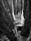Scary Trees- Wine Shanty Track South (2) by Ben Loveday