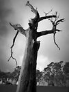 Scary Tree- Woodside by Ben Loveday
