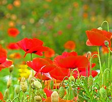 Red Poppies Flowers Meadow Art Prints by BasleeArtPrints