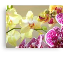 Orchids Floral Art Prints Orchid Flowers Canvas Print