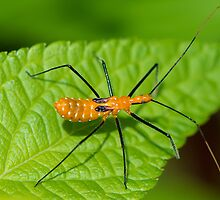 Assassin Bug Up Close by imagetj
