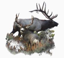 Bull elk and mule deer buck by saltypro