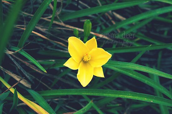 Buttercup by Emma Deer Photography