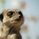 Meerkat by Kimberly Chadwick