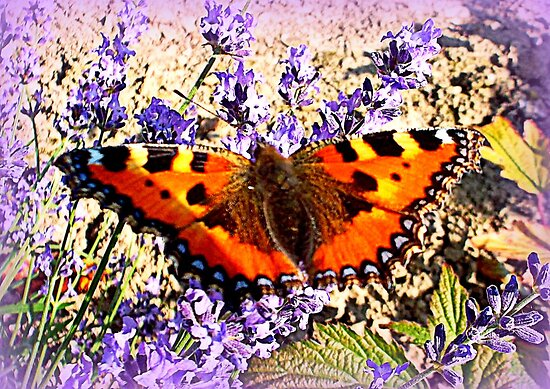 Small Tortoiseshell on Lavender by ©The Creative  Minds