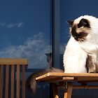 Female Ragdoll Outdoors by abbei