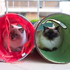 Cat Tunnels by abbei