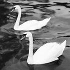White Swans by Michael  Kemp