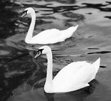 White Swans by Michael  Kemp