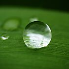 Water droplet on leave by zhao wei koh