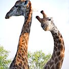 Walking with Giraffes - South Africa by Beth  Wode