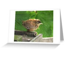 'Oh baby it's a wild world' Greeting Card