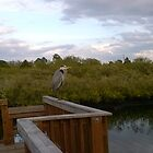 Great Blue Heron at Eagle Point Park, New Port Richey, FL by Ellen Turner