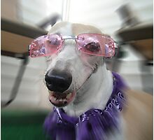 Canine Diva Photographic Print