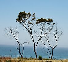 Stripped Down Cypress Along the Ocean by Martha Sherman