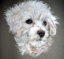 Bichon Frise Dog Portrait by Oldetimemercan