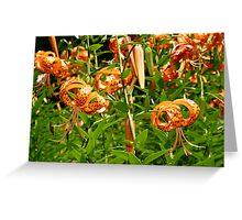 Turk's Cap Lilies - Lilium superbum L. - Nodding Beauties Greeting Card