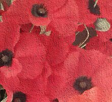 POPPIES  by OlaG