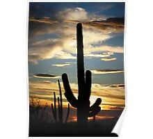 Saguaro Silhouette at Sunset  Poster