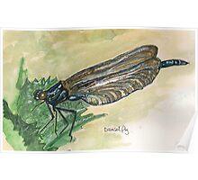 damsel fly Poster