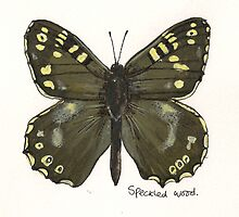 Speckled wood butterfly by Sam Burchell