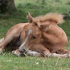 Sleepy Foal by Gill Langridge