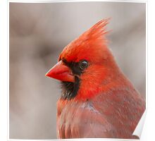 Cardinal Portrait Poster
